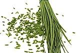 150 graines Aromatiques - CIBOULETTE - Allium schoenoprasum - Goût subtil