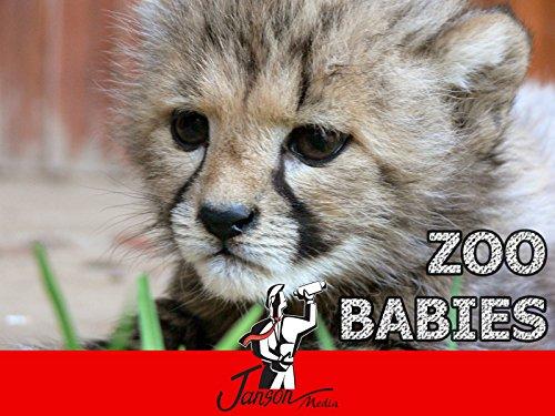 Zoo Babies - Season 1