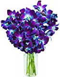 Blue Orchid Fresh Flower Bouquet (10 Stems) - With Vase
