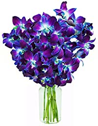 10 Stem Bouquet of Fresh Blue Dendrobium Orchids - With Vase