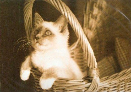 Kitten playing cat