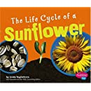 The Life Cycle of a Sunflower (Plant Life Cycles)