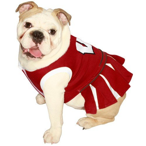 NCAA University of Wisconsin Badgers Cheerleader Dog Outfit, Medium