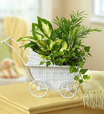1-800-Flowers - Baby Stroller Garden By 1800Flowers front-990334
