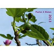 Planten & Blomen 2013 (Wandkalender 2013 DIN A2 quer)