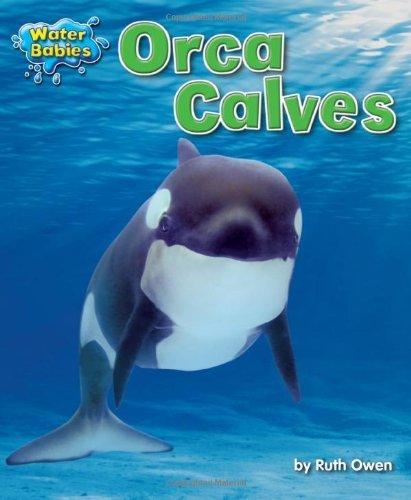 orca-calves-water-babies-by-ruth-owen-2012-08-01
