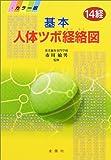 基本人体ツボ経絡図―14経