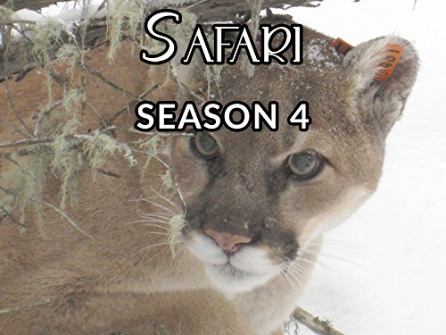 Safari - Season 4