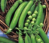 PEA - METEOR - DWARF FIRST EARLY - 300 FINEST SEEDS
