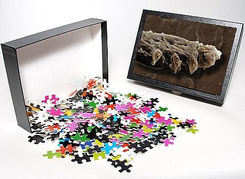 Photo Jigsaw Puzzle Of Scanning Electron Micrograph (Sem) Follicle Mite From Ardea Wildlife Pets