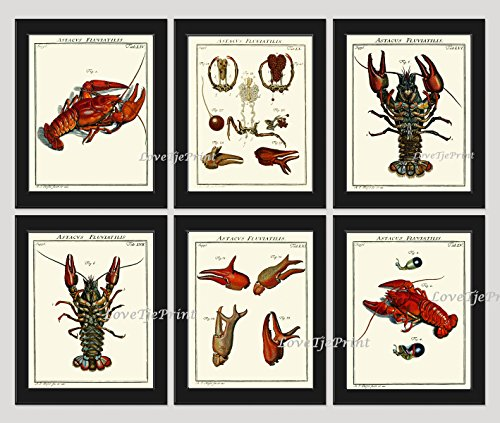 lobster-print-set-of-6-prints-antique-beautiful-red-blue-lobsters-anatomy-natural-science-sea-ocean-