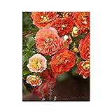 """Rosenbild: M�rchenhafte Rosen als Leinwandbild im Keilrahmen im Format 100cm x 75cmvon """"NatureToPrint"""""""