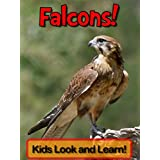 Falcons! Learn About Falcons and Enjoy Colorful Pictures - Look and Learn! (50+ Photos of Falcons)