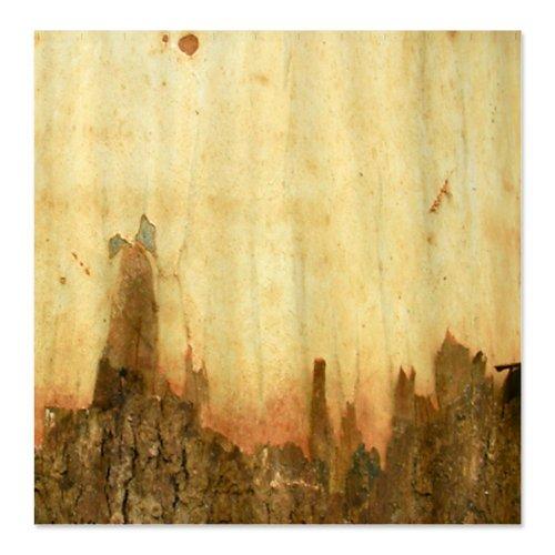 CafePress Rustic Bark Texture Shower Curtain   Standard White