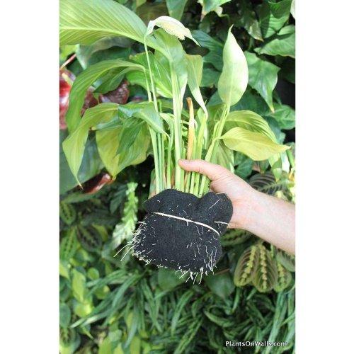 florafelt vertical garden kit 8 pocket living wall 12 in. Black Bedroom Furniture Sets. Home Design Ideas