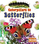 Caterpillars to Butterflies (It's Fun...