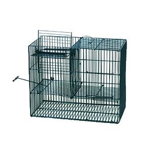 Trappole per uccelli uccelli trappola gabbia social for Trappola per gazze