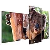 Bilderdepot24 Cuadros en Lienzo Koala - 130x80 cm 3 piezas - Enmarcado listo Bastidor imagen. Made in Germany!...