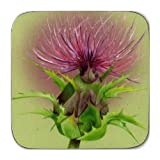 Castle Melamine Stirling Thistle Coasters - Set of 6