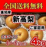 高知産大玉新高梨4玉~6玉サイズ約4kg
