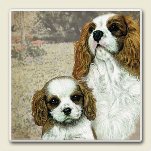 AbsorbaStone Coaster set~ Cavalier King ~4 Tile Drink Coasters ~ code 764C