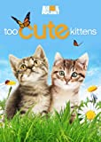 Too Cute Kittens [Import]