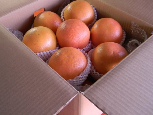 フルーツyamakiti 南アフリカ産 スタールビーグレープ 大玉15ー16玉