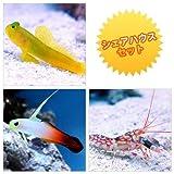 (海水魚)シェアハウスセットA(ギンガハゼ+ハタタテハゼ+ニシキテッポウエビ) 本州・四国限定[生体]