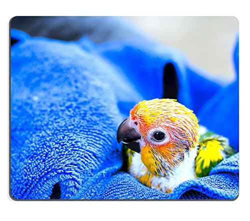 Luxlady Natural Rubber Mousepads IMAGE ID 31365477 Sun conure parrot on blue towel