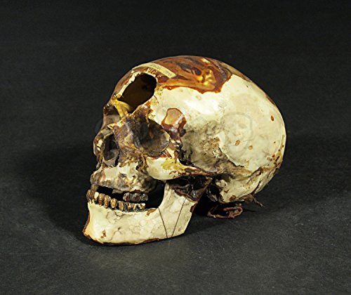 original-prop-dracula-2000-carfax-abbey-skull-authentic