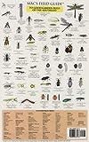 Mac's Field Guides to Southeast Garden Bugs (Mac's Field Guides) (0898867479) by MacGowan, Craig