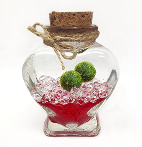 Luffy Marimo Ball Gift Set - Perfect idea for someone special (Packaging material included)