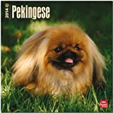 Pekingese 2014 Wall BrownTrout