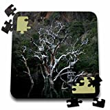 Angelique Cajams Landscapes Blyde Canyon - A tree in the lake - 10x10 Inch Puzzle (pzl_26835_2)