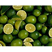 Mexican Lime Tree - Bartender's Lime - 6