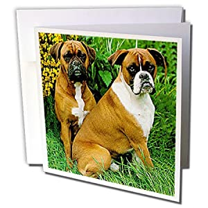gc_405_1 Dogs Boxer - Boxer - Greeting Cards-6 Greeting Cards with envelopes
