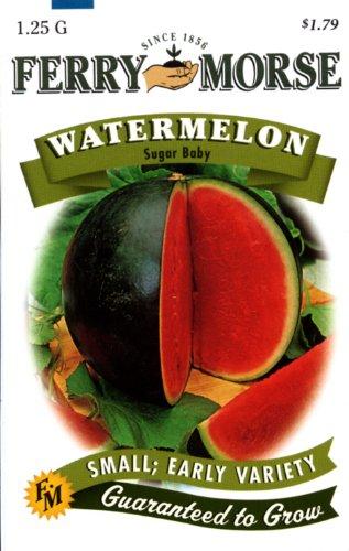 Ferry-Morse 1419 Watermelon Seeds, Sugar Baby (1.25 Gram Packet)
