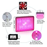 Galaxyhydro LED Grow Plant Light 300w Greenhouse Indoor Hydroponic Grow Lighting 9 Band