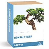 Grow Your Own Bonsai Tree - bonsai tree gift box