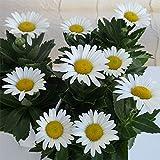ハマギク(浜菊)3.5号ポット2株セット[秋に白い花を咲かせる丈夫な多年草]