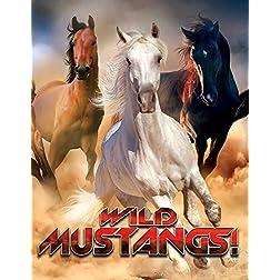 Wild Mustangs!