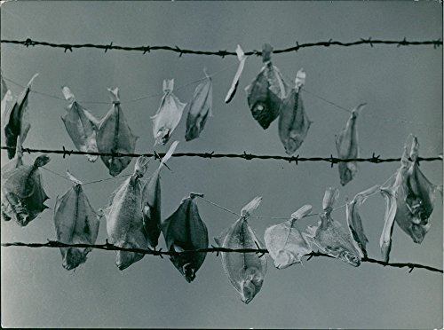 vintage-photo-of-a-dried-fish-hang-in-the-rope-1948