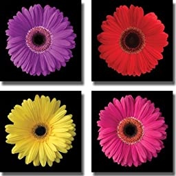 Gerbera Daisy Purple, Red, Yellow & Pink by Jim Christensen 4-pc Premium Gallery Wrapped Canvas Giclee Art Set (Ready to Hang)