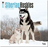Siberian Huskies 2015 Square 12x12 (Multilingual Edition)