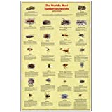 World's Most Dangerous Insects and Arachnids Poster