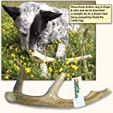 "Antler Dog Chew from Pet Expertise, X-Large 8""-10"" Long, 1 Piece"