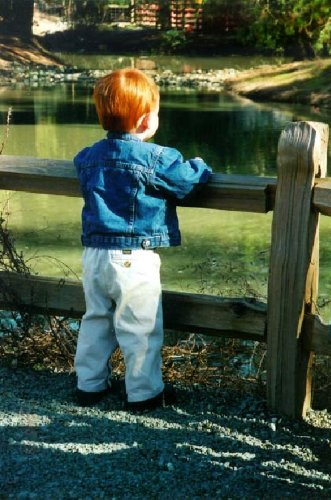 Caring for Your Garden Fish Pond