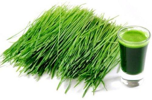 1 Lb. Organic Barley Grass Juice Powder Pure 16 Oz ~ Superfood