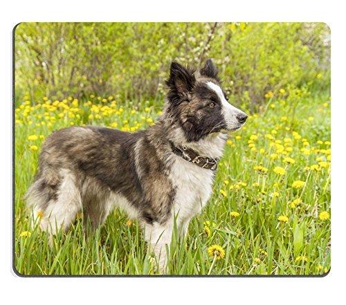 liili-tapis-de-souris-tapis-de-souris-en-caoutchouc-naturel-photo-id-28111359-image-de-un-chien-sur-