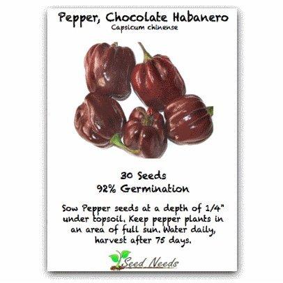30+ Chocolate Habanero Pepper Seeds By Seed Needs